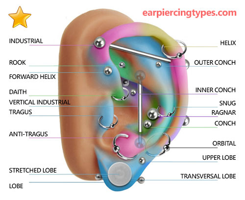 ear piercing types diagram